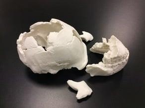 Homo Naledi Skull Reconstruction - Calvaria