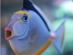 Nori Clip For Reef Tanks