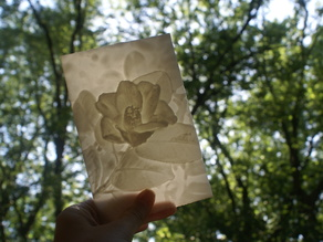 Camellia More-Than-a-Lithophane