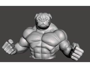 muscle pug
