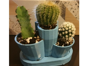 Plant pot for my Cacti
