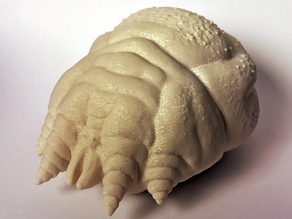 Sarcoptic Mite (Sarcoptes scabiei)