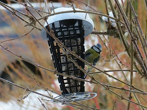 Titmouse Feeder - A Suet Cake Container for Feeding Birds
