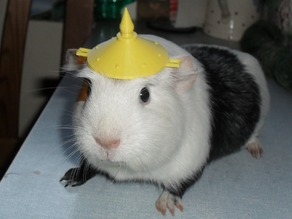 Guinea pig battle armour