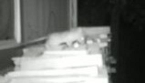 Raspberry Pi Night Vision Camera For Motioneye(os) by stefi01
