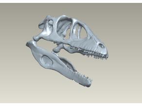 Real Scan Raptor Skull