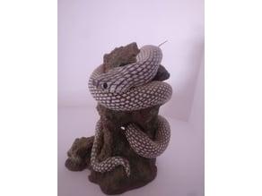 Snake on a rock - Serpiente sobre una roca