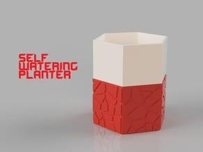 Self-Watering Planter 2