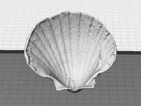 Sea Shell - Digitizer MultiScan