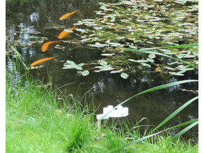 Wireless electric fish feeder
