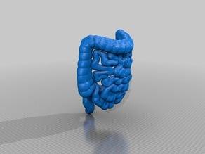 Medical Student Lower GI Tract Anatomy