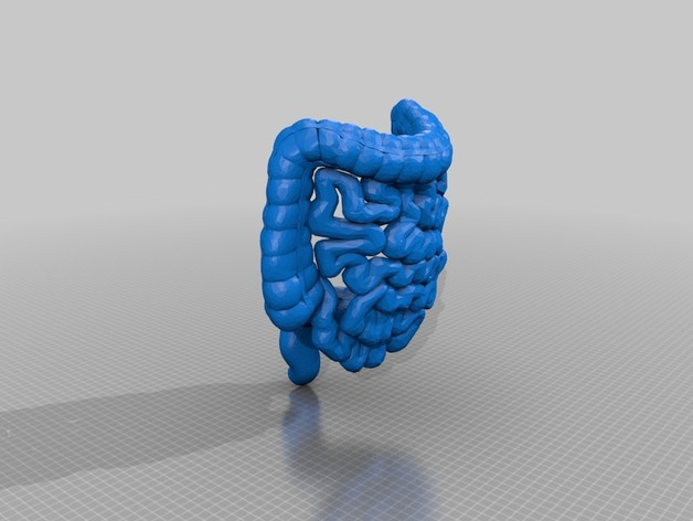Medical Student Lower Gi Tract Anatomy By Airforce Thingiverse