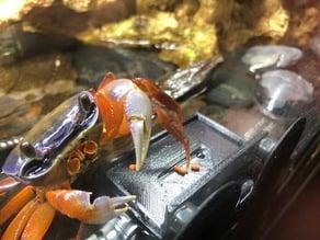 Aquarium crab feeder