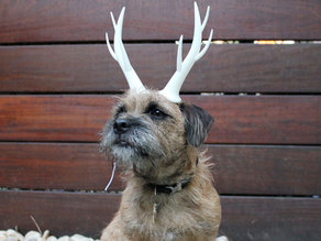Wearable Reindeer Antlers