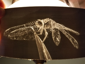 Dragonfly lithophane