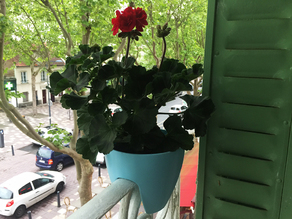 Plant Pot / Hanging Planter