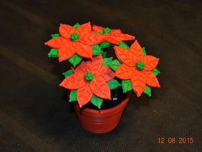 Poinsettia in a flower pot