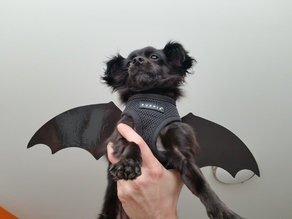 Puppy / Dog Bat Wings - Halloween Costume