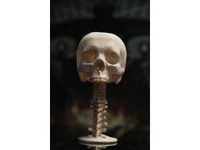 Skullcup