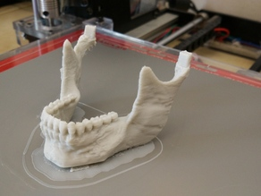 Human Skull - separated mandible and connectors