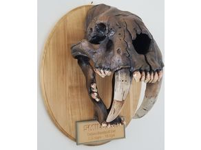 Smilodon Skull Fossil - with Augmented Reality app