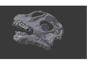 Camarasaurus Skull