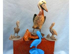 A Pelican
