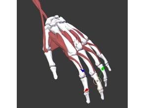 Multi material hand