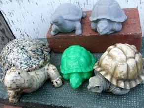 Turtle and Tortoise