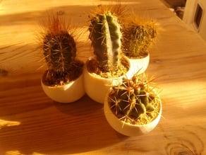 Mini Cactus Farm
