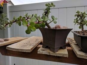 Semi Cascade Bonsai Pot - Endure
