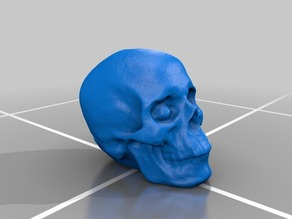 Photogrammetry Created Skull - Agisoft Photoscan