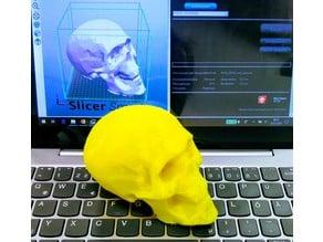 human skull - Schädel von Rudi