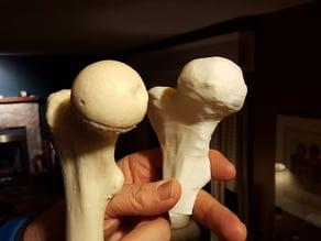 Alberta High School CTS - 3D Printed Bone Replacements