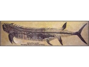 Xiphactinus Dinosaur Fossil (Complete)
