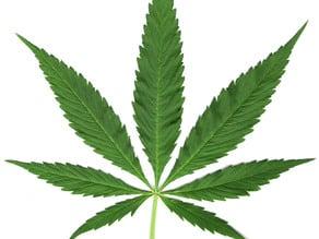 high detail pot leaf