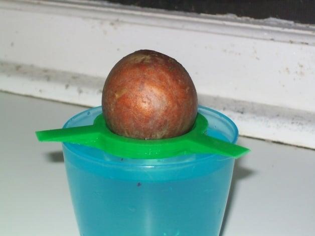 Avocado sprouter