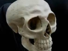 Human skull (size configurable)