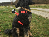 Image Result For Harness Dog Can