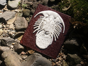 Trilobite More-Than-a-Lithophane