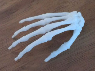 BodyParts3D Hand Skeleton