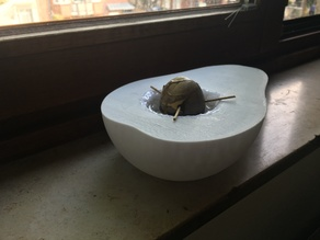 Avocado flowerpot