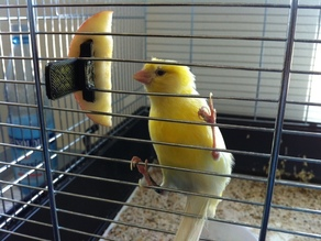 Apple Skewer for Birdcages 1.0