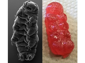 Tardigrade gummy bear molds