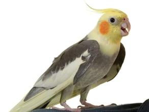 test of bird