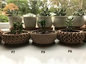 Succulent Planter 7
