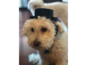 Small Dog Top Hat!!!