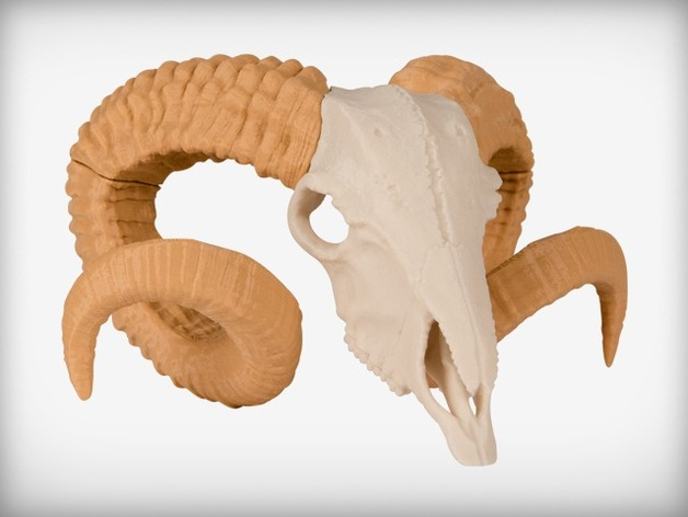 ram skull by makerbot thingiverse ram skull by makerbot thingiverse
