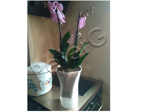 Big Orchid Pot for our loved woman