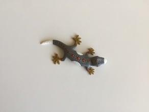 Multi Color Gecko